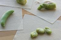 旬の野菜の春巻き